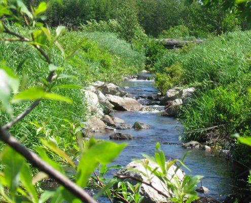 Rivière Le Bras